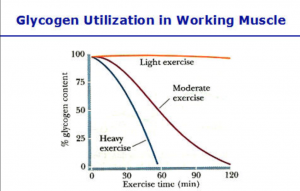 effects of diabetes muscles preventing diabetes Best in Corporate Health